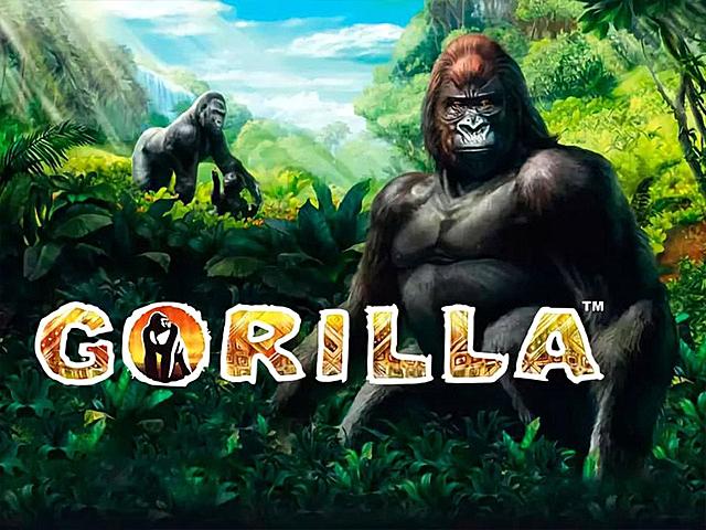 Онлайн аппарат Gorilla (Горилла) в Вулкан клубе